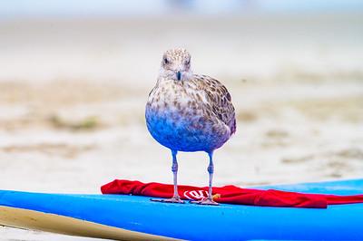 20210829-Skudin Surf Lessons 8-29-21Z62_5884