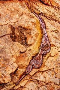 Mystery Dinosaur Bone