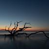 Dawn On Driftwood Beach