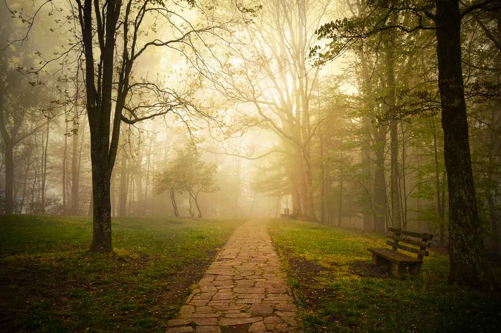 Golden Fog<br /> A foggy mountain top park in West Virginia, beautifully quiet and still.