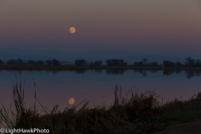 Hunter Moon over the rice fields