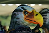 SkydiveStore.com's mascot. 8/11/07
