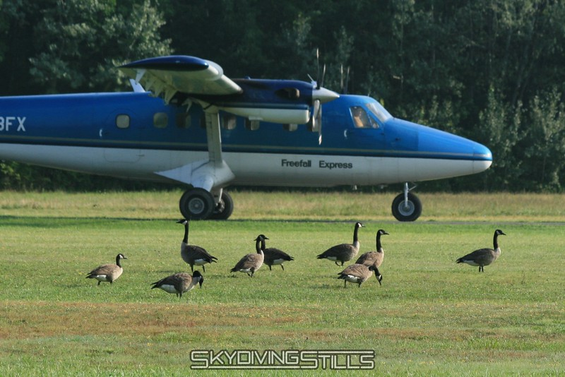 Not even bothered by mother goose taxiing by. 8/10/08