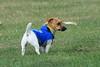 Eddie the Dog.  As opposed to Eddie the Australian. 11/1/08