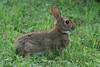Bunny Wabbit. 7/27/08