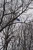Jason sinks in to avoid trees. 2/28/09