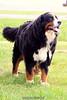 Bri's doggy. 5/16/09
