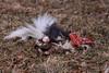 The dead skunk.  Gross. 2/20/10