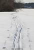 Cross country ski tracks through the landing area. 1/22/12