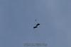 2012-12-09_skydive_cpi_0489