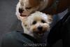 Puppies! 3/4/12