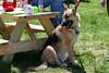 Doggie Grey. 5/12/12