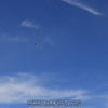 """Wingsuiters fly past.<br><span class=""""skyfilename"""" style=""""font-size:14px"""">2015-06-13_skydive_cpi_0899</span>"""