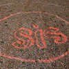"Graffiti in the peas.<br><span class=""skyfilename"" style=""font-size:14px"">2015-06-13_skydive_cpi_0012</span>"