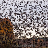 "THAT's a lot of birds! <br><span class=""skyfilename"" style=""font-size:14px"">2016-11-05_skydive_cpi_0536</span>"