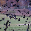 """That's not a lot of birds. <br><span class=""""skyfilename"""" style=""""font-size:14px"""">2016-11-05_skydive_cpi_0525</span>"""