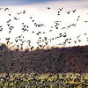"Birds everywhere. <br><span class=""skyfilename"" style=""font-size:14px"">2016-11-05_skydive_cpi_0421</span>"