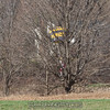 """Behind the trees. <br><span class=""""skyfilename"""" style=""""font-size:14px"""">2016-03-12_skydive_cpi_0184</span>"""
