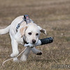 """Snagging his toy. <br><span class=""""skyfilename"""" style=""""font-size:14px"""">2018-02-17_skydive_cpi_0095</span>"""