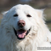 "A polar bear with a smile. <br><span class=""skyfilename"" style=""font-size:14px"">2018-04-14_skydive_cpi_0106</span>"