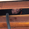 """PJ in the rafters. <br><span class=""""skyfilename"""" style=""""font-size:14px"""">2019-03-23_skydive_cpi_0051</span>"""