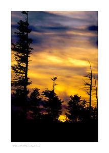 Sunrise through wind blown trees near Bear Rock, Monongahela National Forest, WV