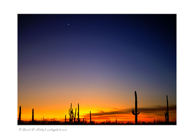 Sonoran Desert Sunset, Organ Pipe National Monument, AZ
