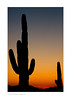 Saguaro Cactus Silhouette, Organ Pipe National Monument, AZ
