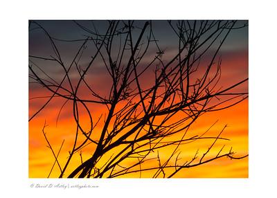 Sunset through bush, Great Sand Dunes National Park, CO