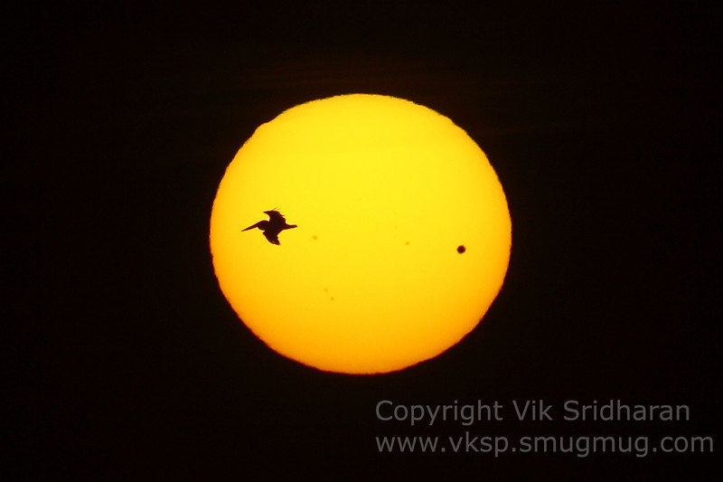 Transit of Venus and some other pelican-shaped planet.