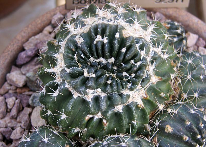 Circular crest
