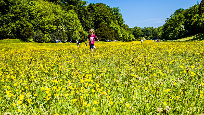 Wild Flowers at Fountains Abbey