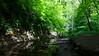 Cestička vedie v rokline Skelton potoka ...