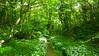 250 metrov od jej domčeku sa človek nachádza v takejto malebnej anglickej džungli.