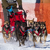 Adam Moore's 6-dog team near the start of the 2013 WolfTrack Classic