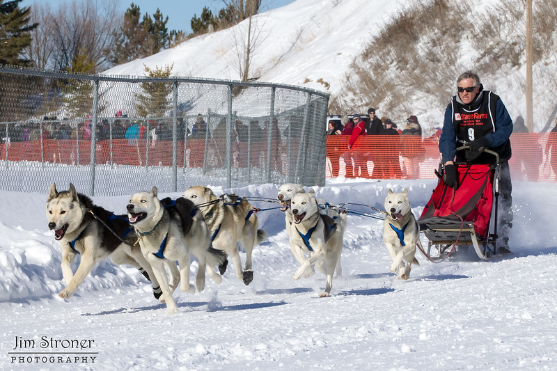 Andy Romness's 6-dog team near the start of the 2013 WolfTrack Classic