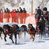 Clayton Schneider's 6-dog team near the start of the 2013 WolfTrack Classic