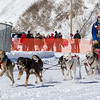 Curtis Craig's 6-dog team near the start of the 2013 WolfTrack Classic