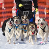 Dusty Klaven's 6-dog team near the start of the 2013 WolfTrack Classic