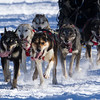 Gail Branstrom's 6-dog team near the start of the 2013 WolfTrack Classic