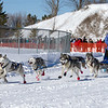 Julie Schmelzer's 6-dog team near the start of the 2013 WolfTrack Classic
