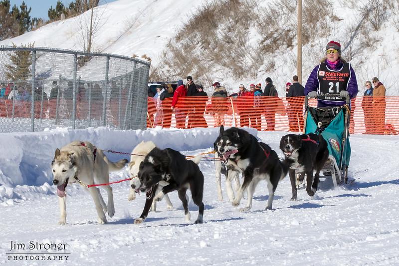 Kris Ausland-Saari's 6-dog team near the start of the 2013 WolfTrack Classic