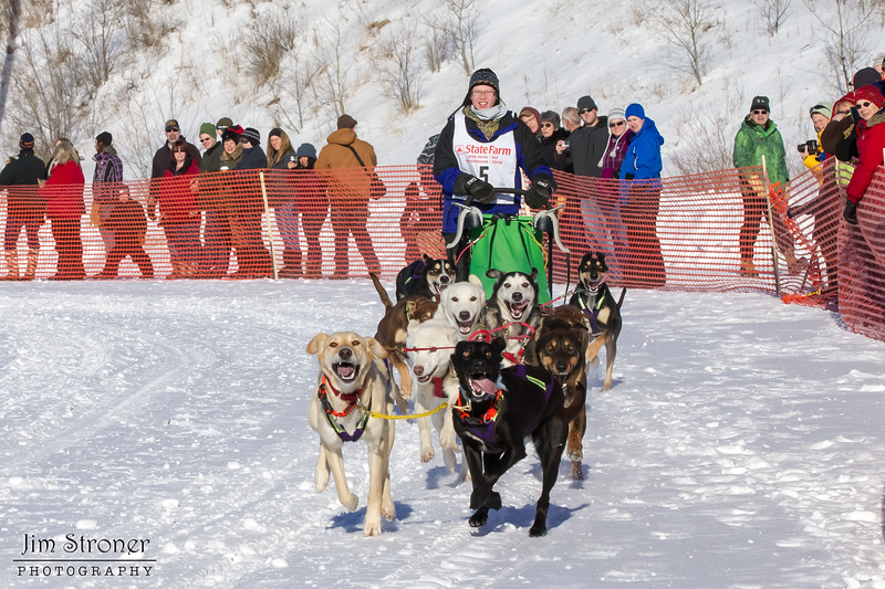 Leanne Bergen's 10-dog team near the start of the 2013 WolfTrack Classic