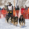 Matt Groth's 10-dog team near the start of the 2013 WolfTrack Classic