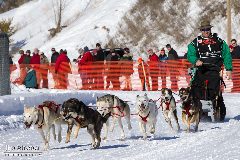 Scott Edgett's 6-dog team near the start of the 2013 WolfTrack Classic
