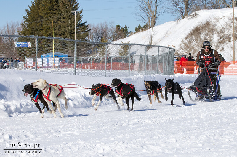 Stephanie Davis's 6-dog team near the start of the 2013 WolfTrack Classic