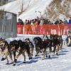 Teri Gapinski's 10-dog team near the start of the 2013 WolfTrack Classic