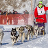 Theodosia Schneider's 10-dog team near the start of the 2013 WolfTrack Classic