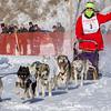 Theodosia Schneider's 10-dog team near the start of the 2013 WolfTrack Classic