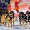 Tim Chisholm's 6-dog team near the start of the 2013 WolfTrack Classic